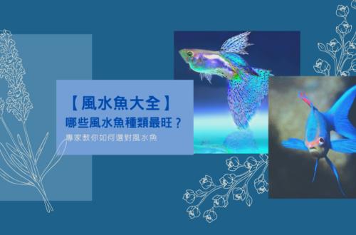 【風水魚大全】哪些風水魚種類最旺?專家教你如何選對風水魚