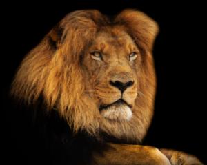 雙子座相剋獅子座,為什麼?