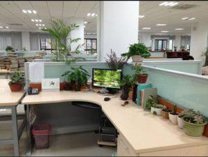 辦公室傢俱擺設風水